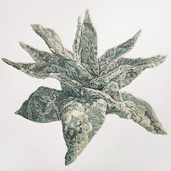 Succulent Lace